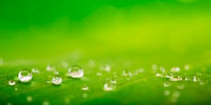 Eibarlar, ofrece una amplia gama de aceites biodegradables en Euskadi